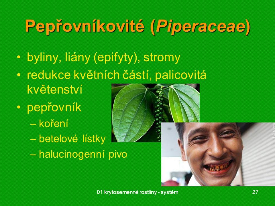 01 krytosemenné rostliny - systém2701 krytosemenné rostliny - systém27 Pepřovníkovité (Piperaceae) byliny, liány (epifyty), stromy redukce květních částí, palicovitá květenství pepřovník –koření –betelové lístky –halucinogenní pivo