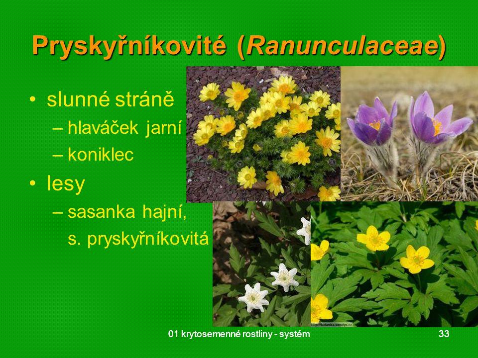 01 krytosemenné rostliny - systém3301 krytosemenné rostliny - systém33 Pryskyřníkovité (Ranunculaceae) slunné stráně –hlaváček jarní –koniklec lesy –sasanka hajní, s.