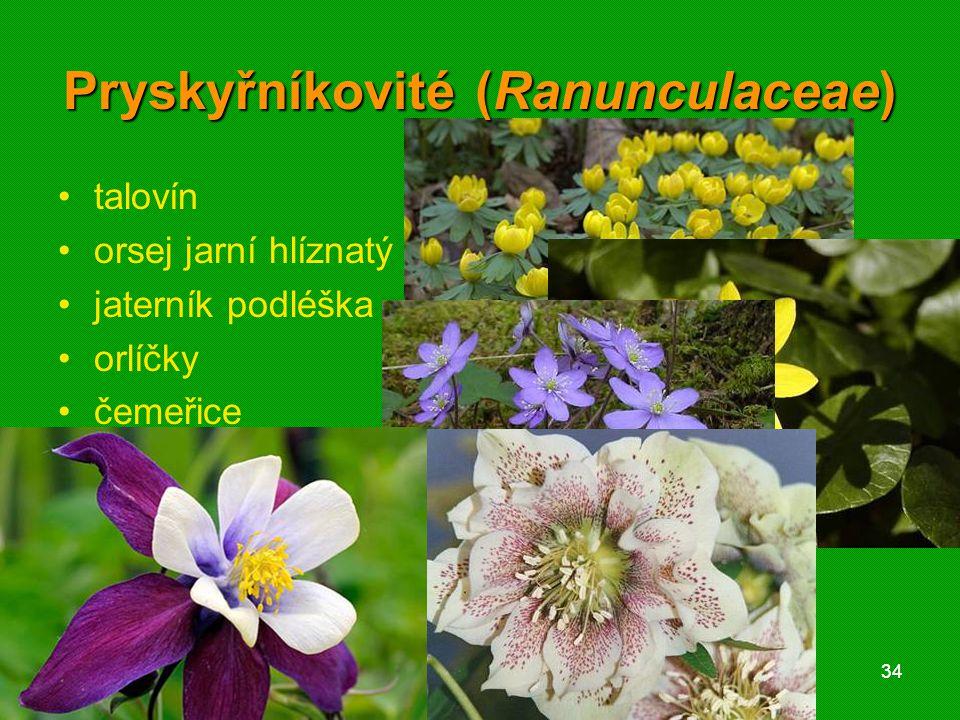 01 krytosemenné rostliny - systém3401 krytosemenné rostliny - systém34 Pryskyřníkovité (Ranunculaceae) talovín orsej jarní hlíznatý jaterník podléška orlíčky čemeřice