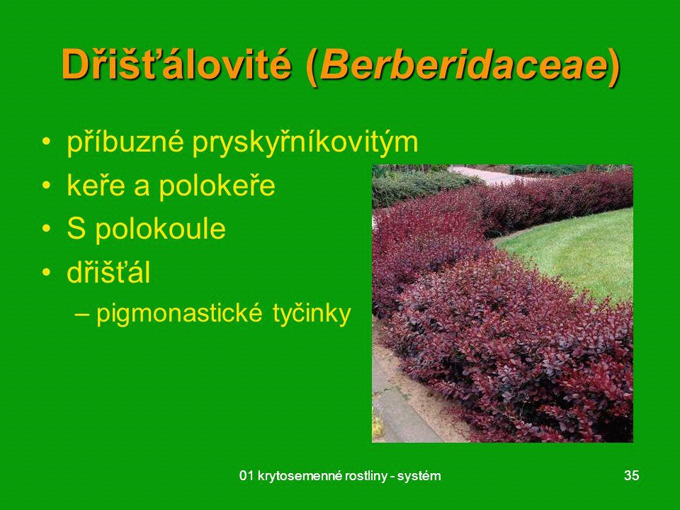 01 krytosemenné rostliny - systém3501 krytosemenné rostliny - systém35 Dřišťálovité (Berberidaceae) příbuzné pryskyřníkovitým keře a polokeře S polokoule dřišťál –pigmonastické tyčinky