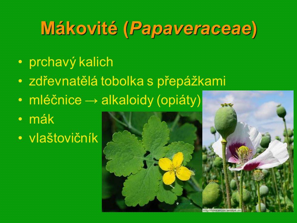 01 krytosemenné rostliny - systém3601 krytosemenné rostliny - systém36 Mákovité (Papaveraceae) prchavý kalich zdřevnatělá tobolka s přepážkami mléčnice → alkaloidy (opiáty) mák vlaštovičník