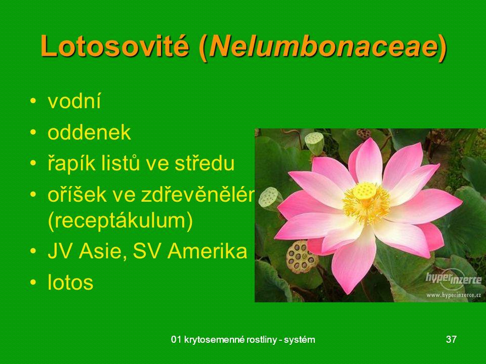 01 krytosemenné rostliny - systém3701 krytosemenné rostliny - systém37 Lotosovité (Nelumbonaceae) vodní oddenek řapík listů ve středu oříšek ve zdřevěnělém květním lůžku (receptákulum) JV Asie, SV Amerika lotos