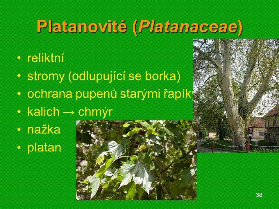 01 krytosemenné rostliny - systém3801 krytosemenné rostliny - systém38 Platanovité (Platanaceae) reliktní stromy (odlupující se borka) ochrana pupenů starými řapíky kalich → chmýr nažka platan