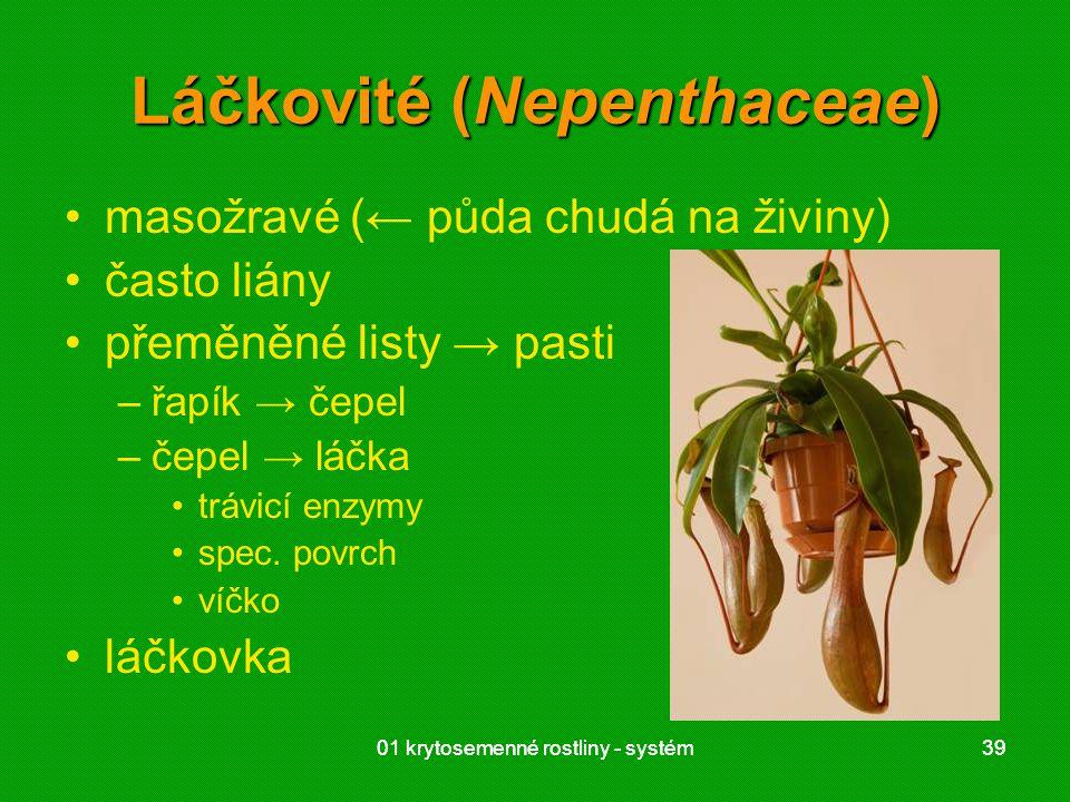 01 krytosemenné rostliny - systém3901 krytosemenné rostliny - systém39 Láčkovité (Nepenthaceae) masožravé (← půda chudá na živiny) často liány přeměně