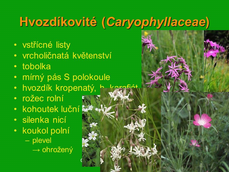 01 krytosemenné rostliny - systém4201 krytosemenné rostliny - systém42 Hvozdíkovité (Caryophyllaceae) vstřícné listy vrcholičnatá květenství tobolka mírný pás S polokoule hvozdík kropenatý, h.