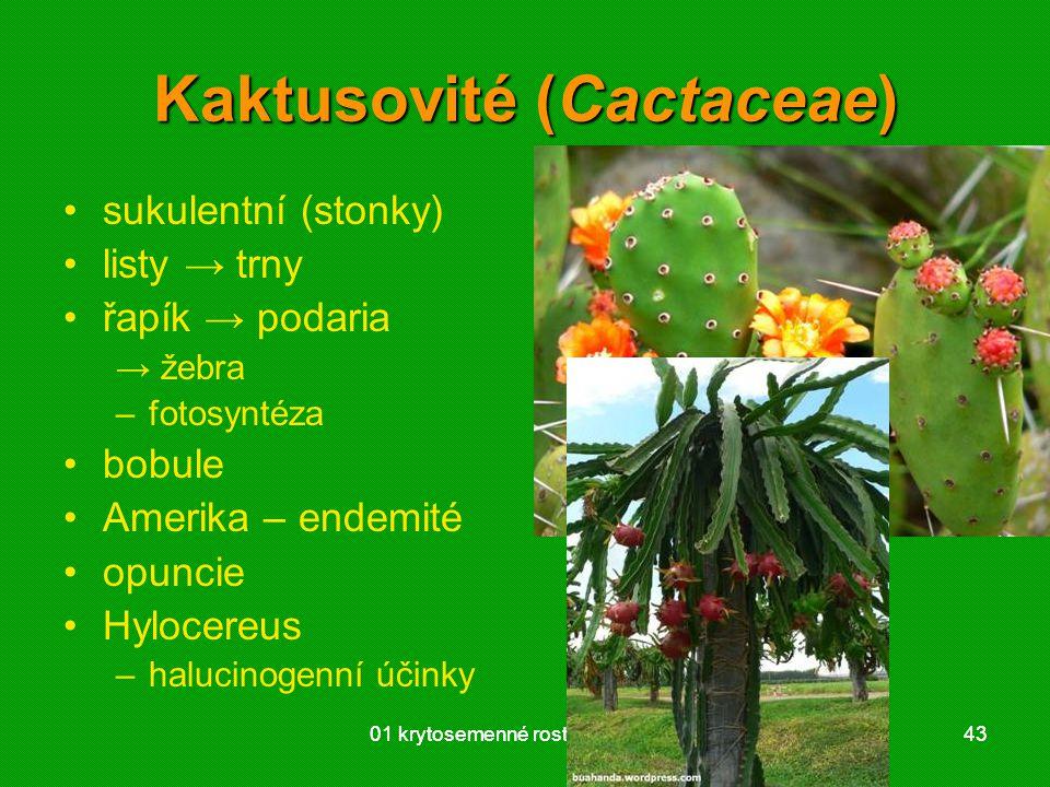 01 krytosemenné rostliny - systém4301 krytosemenné rostliny - systém43 Kaktusovité (Cactaceae) sukulentní (stonky) listy → trny řapík → podaria → žebra –fotosyntéza bobule Amerika – endemité opuncie Hylocereus –halucinogenní účinky