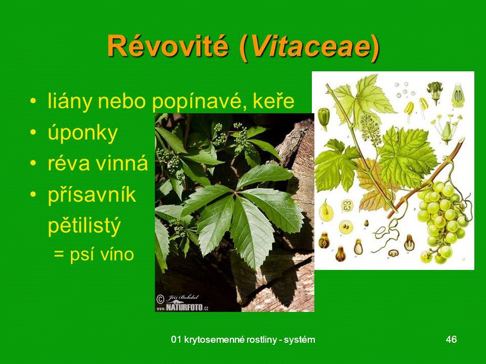 01 krytosemenné rostliny - systém4601 krytosemenné rostliny - systém46 Révovité (Vitaceae) liány nebo popínavé, keře úponky réva vinná přísavník pětilistý = psí víno