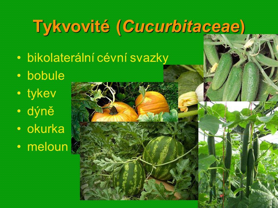 01 krytosemenné rostliny - systém4901 krytosemenné rostliny - systém49 Tykvovité (Cucurbitaceae) bikolaterální cévní svazky bobule tykev dýně okurka meloun