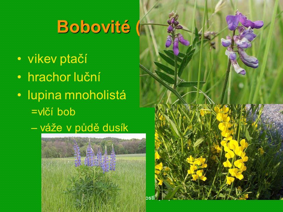 01 krytosemenné rostliny - systém52 Bobovité (Fabaceae) vikev ptačí hrachor luční lupina mnoholistá =vlčí bob –váže v půdě dusík