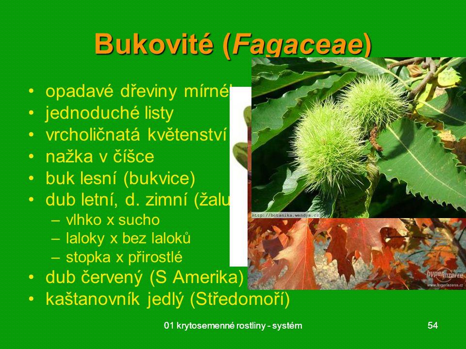 01 krytosemenné rostliny - systém5401 krytosemenné rostliny - systém54 Bukovité (Fagaceae) opadavé dřeviny mírného pásu jednoduché listy vrcholičnatá květenství nažka v číšce buk lesní (bukvice) dub letní, d.