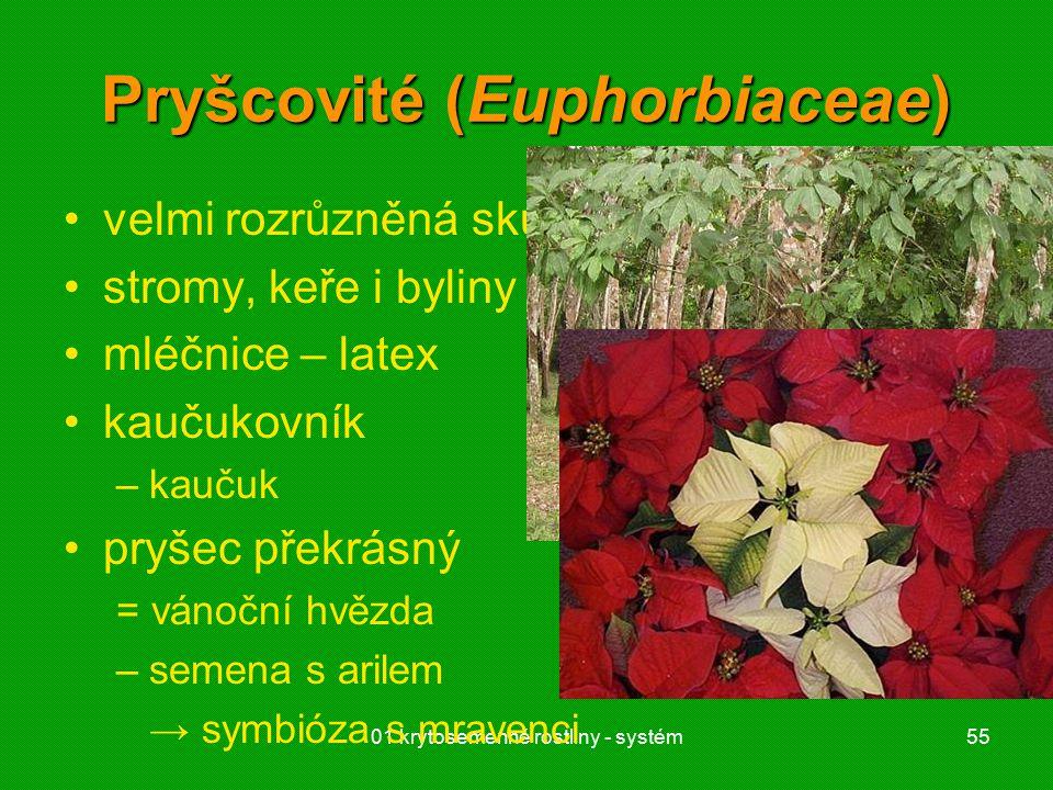 01 krytosemenné rostliny - systém55 Pryšcovité (Euphorbiaceae) velmi rozrůzněná skupina stromy, keře i byliny mléčnice – latex kaučukovník –kaučuk pryšec překrásný = vánoční hvězda –semena s arilem → symbióza s mravenci