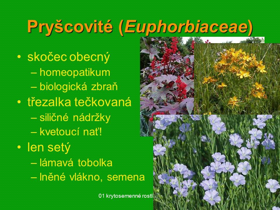 01 krytosemenné rostliny - systém56 Pryšcovité (Euphorbiaceae) skočec obecný –homeopatikum –biologická zbraň třezalka tečkovaná –siličné nádržky –kvet