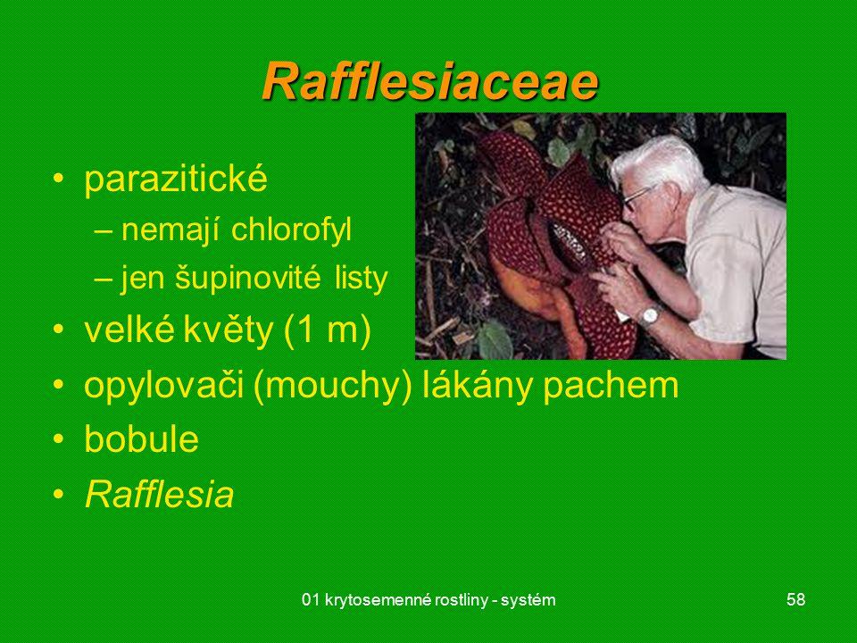 01 krytosemenné rostliny - systém58 Rafflesiaceae parazitické –nemají chlorofyl –jen šupinovité listy velké květy (1 m) opylovači (mouchy) lákány pachem bobule Rafflesia