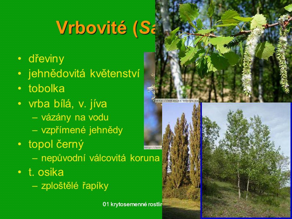 01 krytosemenné rostliny - systém5901 krytosemenné rostliny - systém59 Vrbovité (Salicaceae) dřeviny jehnědovitá květenství tobolka vrba bílá, v. jíva