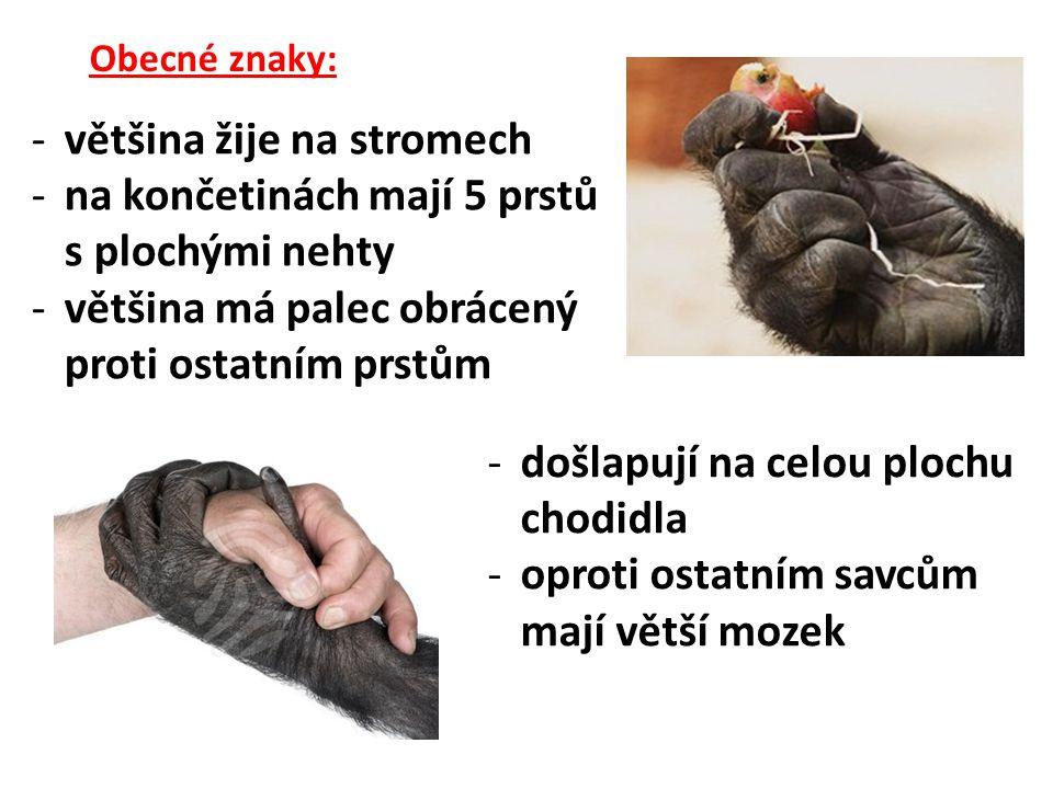 Obecné znaky: -většina žije na stromech -na končetinách mají 5 prstů s plochými nehty -většina má palec obrácený proti ostatním prstům -došlapují na celou plochu chodidla -oproti ostatním savcům mají větší mozek