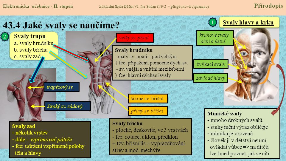 43.4 Jaké svaly se naučíme.Elektronická učebnice - II.