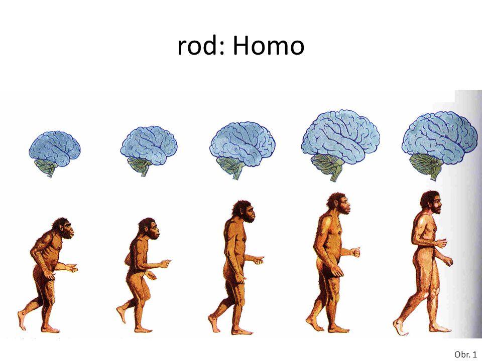rod: Homo Obr. 1