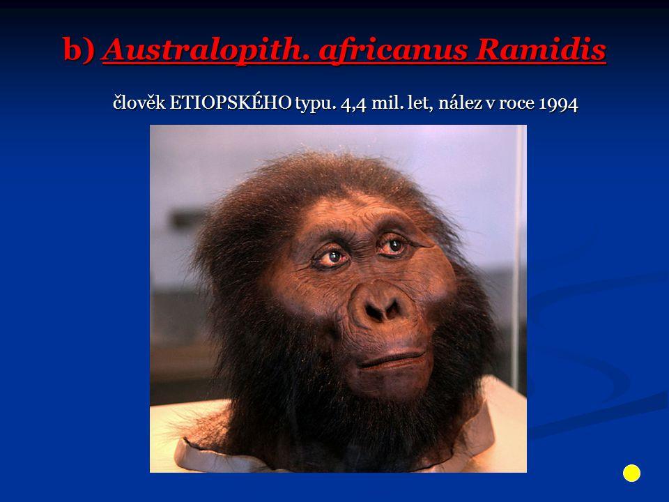b) Australopith. africanus Ramidis člověk ETIOPSKÉHO typu. 4,4 mil. let, nález v roce 1994