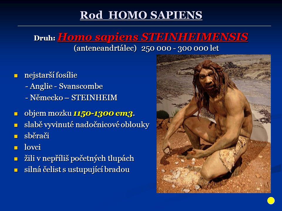 Rod HOMO SAPIENS Druh: Homo sapiens STEINHEIMENSIS (anteneandrtálec) 250 000 - 300 000 let nejstarší fosílie nejstarší fosílie - Anglie - Svanscombe -