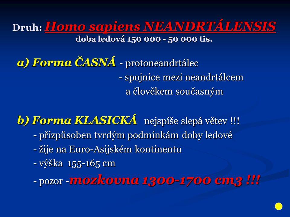 Druh: Homo sapiens NEANDRTÁLENSIS doba ledová 150 000 - 50 000 tis. a) Forma ČASNÁ - protoneandrtálec - spojnice mezi neandrtálcem - spojnice mezi nea