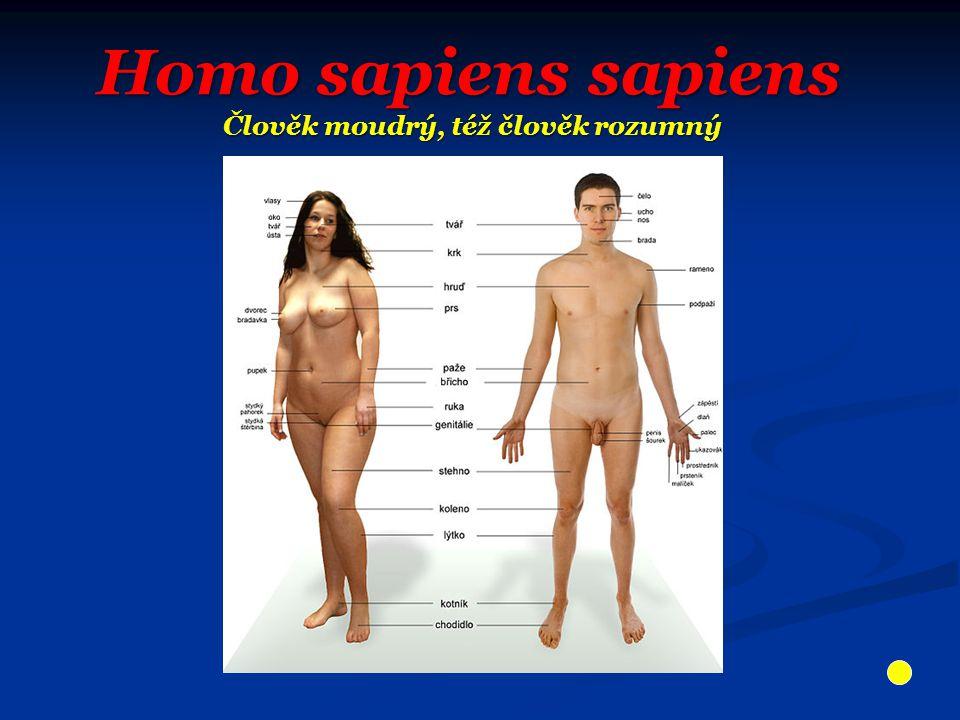 Homo sapiens sapiens Člověk moudrý, též člověk rozumný
