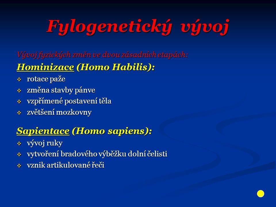 Fylogenetický vývoj Vývoj fyzických změn ve dvou zásadních etapách: Hominizace (Homo Habilis):  rotace paže  změna stavby pánve  vzpřímené postaven