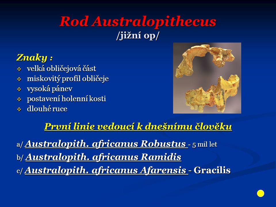 Rod Australopithecus /jižní op/ Znaky :  velká obličejová část  miskovitý profil obličeje  vysoká pánev  postavení holenní kosti  dlouhé ruce Prv