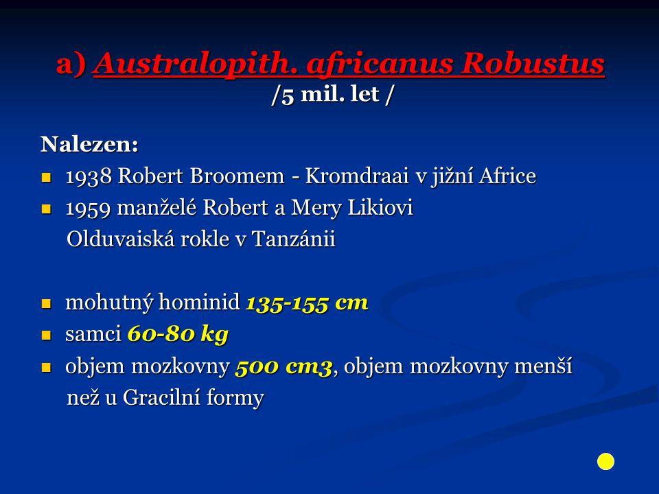 a) Australopith. africanus Robustus /5 mil. let / Nalezen: 1938 Robert Broomem - Kromdraai v jižní Africe 1938 Robert Broomem - Kromdraai v jižní Afri