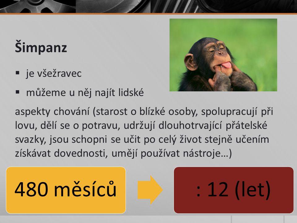 Šimpanz  je všežravec  můžeme u něj najít lidské aspekty chování (starost o blízké osoby, spolupracují při lovu, dělí se o potravu, udržují dlouhotrvající přátelské svazky, jsou schopni se učit po celý život stejně učením získávat dovednosti, umějí používat nástroje…) 480 měsíců: 12 (let)