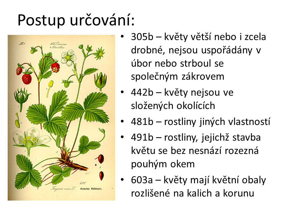 Postup určování: 604a – korunní lístky nesrostlé, každý lze z květu jednotlivě vytrhnout 605a – koruny pravidelné, lze je rozdělit více než jednou rovinou na dvě shodné poloviny 606b – tyčinek více než 10 754b – květy mají více pestíků 775b – rostliny jiných vlastností 776b – rostliny s listy plochými, nedužnatými