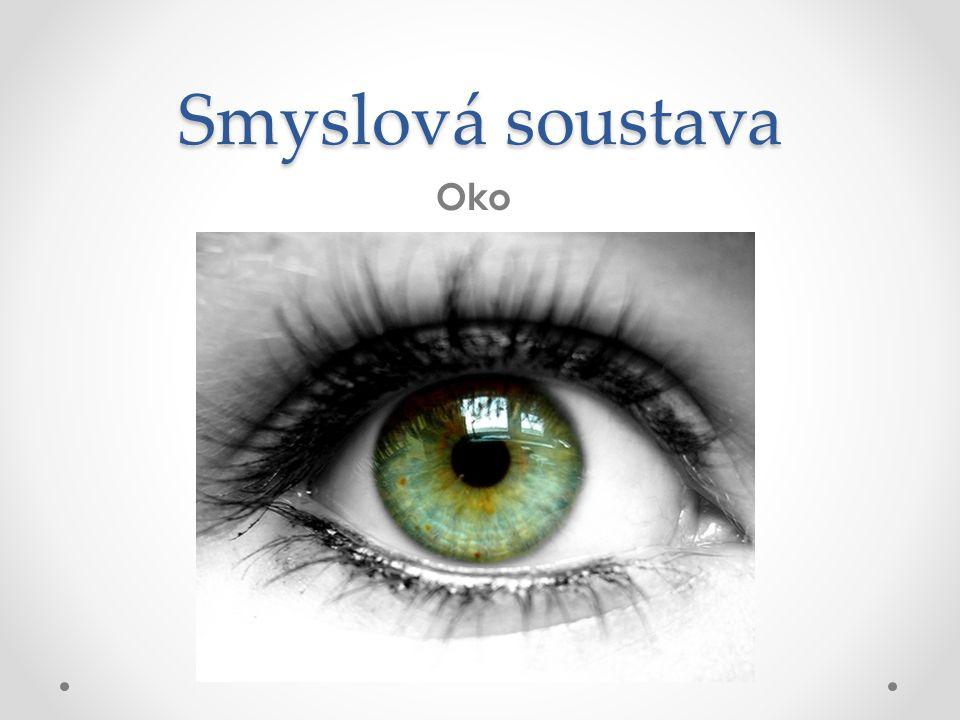 Smyslová soustava Oko