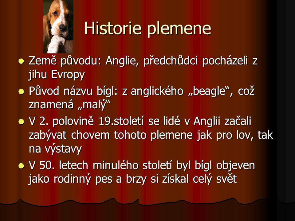 """Historie plemene Země původu: Anglie, předchůdci pocházeli z jihu Evropy Původ názvu bígl: z anglického """"beagle"""", což znamená """"malý"""" V 2. polovině 19."""
