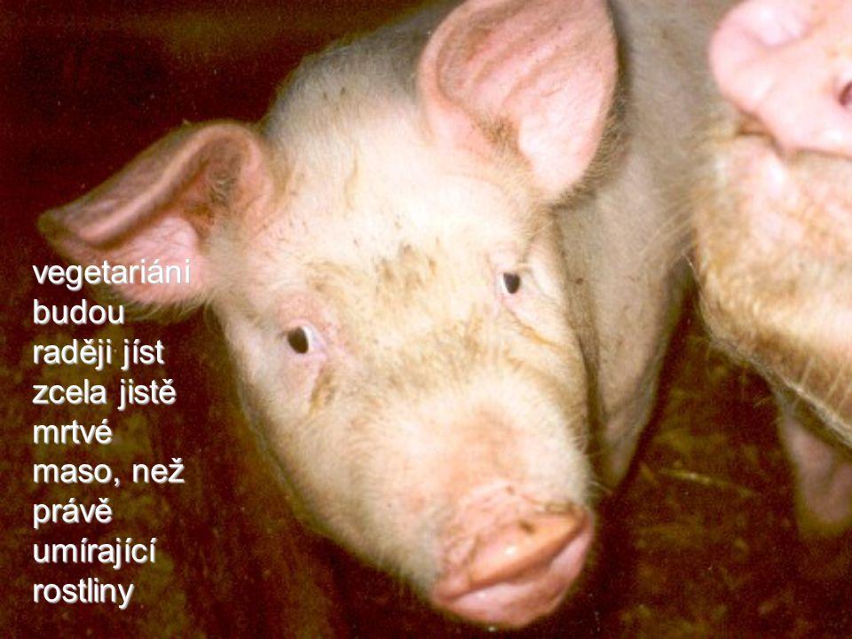 vegetariáni budou raději jíst zcela jistě mrtvé maso, než právě umírající rostliny