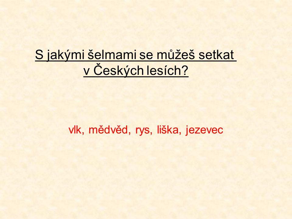 S jakými šelmami se můžeš setkat v Českých lesích? vlk, mědvěd, rys, liška, jezevec