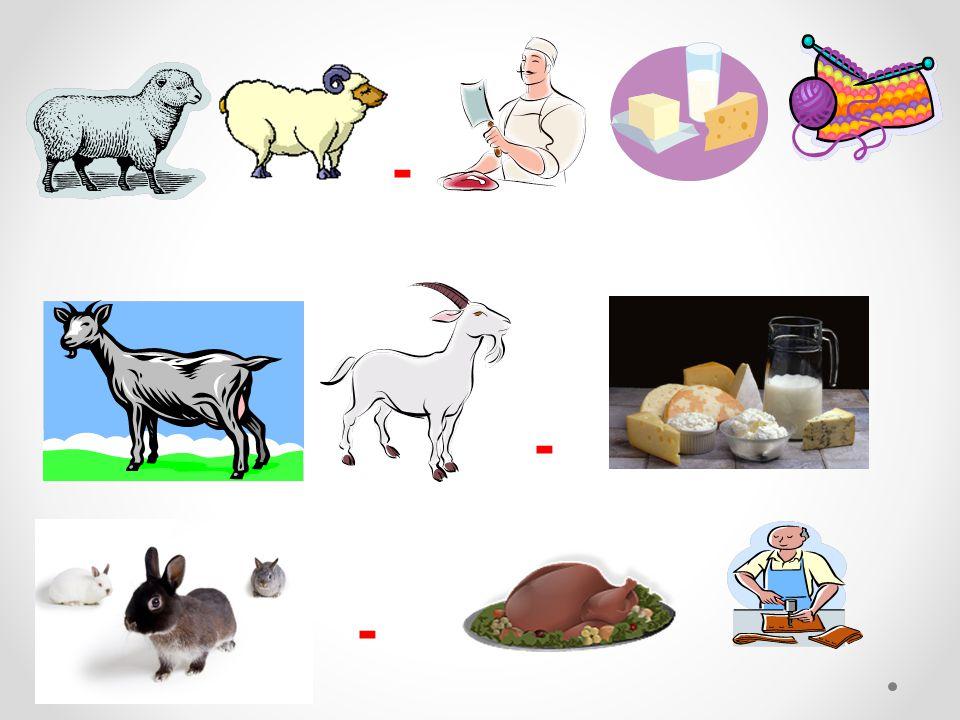 Správné odpovědi: maso - sýr vlna maso - sýr kůže ze všech - maso