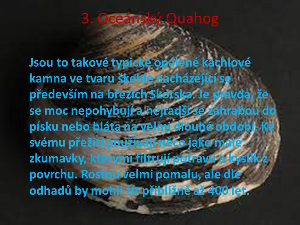 3. Oceánský Quahog Jsou to takové typické opálené kachlové kamna ve tvaru škeble nacházející se především na březích Skotska. Je pravda, že se moc nep