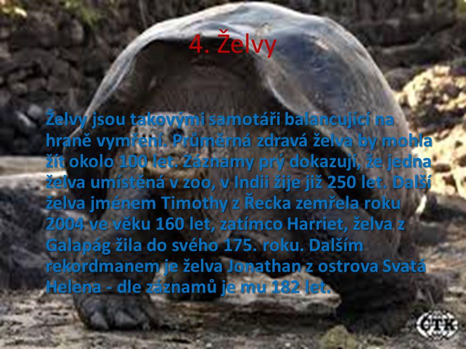 4. Želvy Želvy jsou takovými samotáři balancující na hraně vymření. Průměrná zdravá želva by mohla žít okolo 100 let. Záznamy prý dokazují, že jedna ž