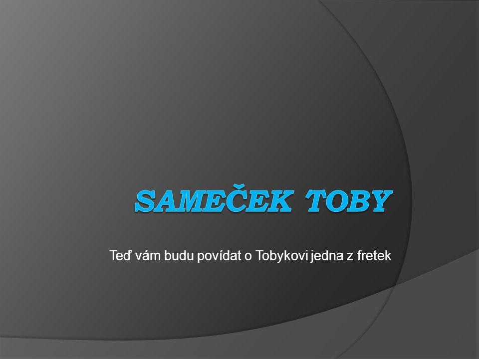Teď vám budu povídat o Tobykovi jedna z fretek