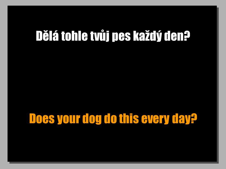 Dělá tohle tvůj pes každý den? Does your dog do this every day?