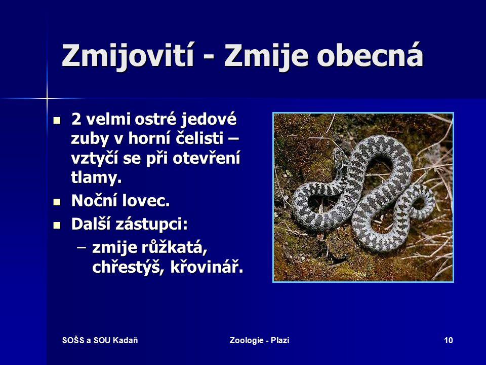 SOŠS a SOU KadaňZoologie - Plazi9 Hadi Tělo bez končetin – druhotně zakrnělé. Tělo bez končetin – druhotně zakrnělé. Jedové zuby – rýhy nebo vnitřní k