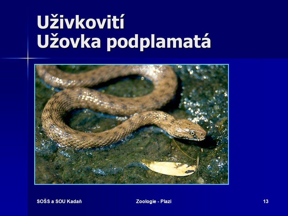 SOŠS a SOU KadaňZoologie - Plazi12 Užovkovití Užovka stromová
