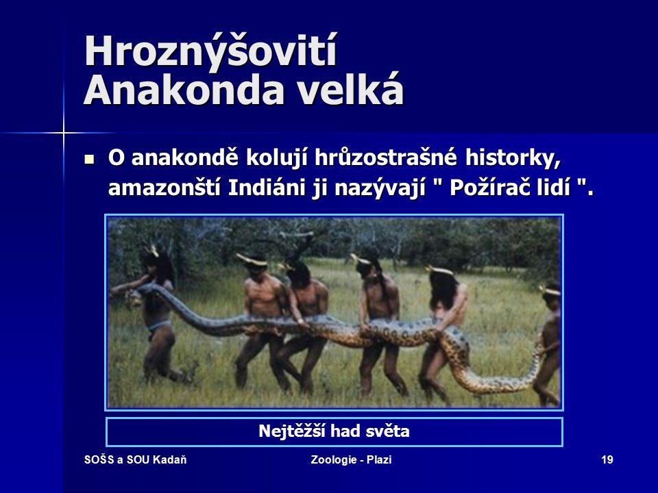 SOŠS a SOU KadaňZoologie - Plazi18 Hroznýšovití Anakonda velká Bohužel, i anakonda se stává obětí chamtivosti člověka. Poptávka po hadí kůži je stále