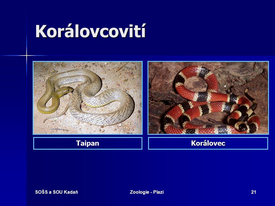 SOŠS a SOU KadaňZoologie - Plazi20 Korálovcovití Prudce jedovatí.