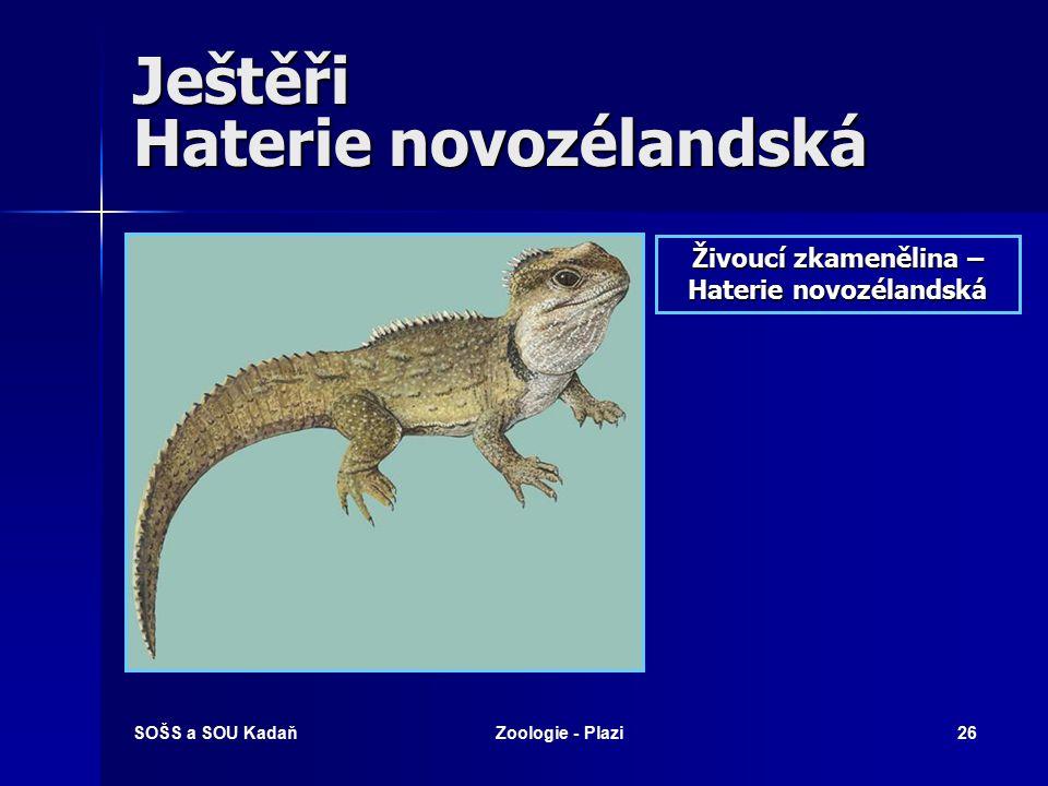 SOŠS a SOU KadaňZoologie - Plazi25 Ještěři - Chameleón