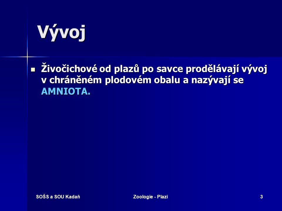 SOŠS a SOU KadaňZoologie - Plazi43 Gaviálovití - Gaviál