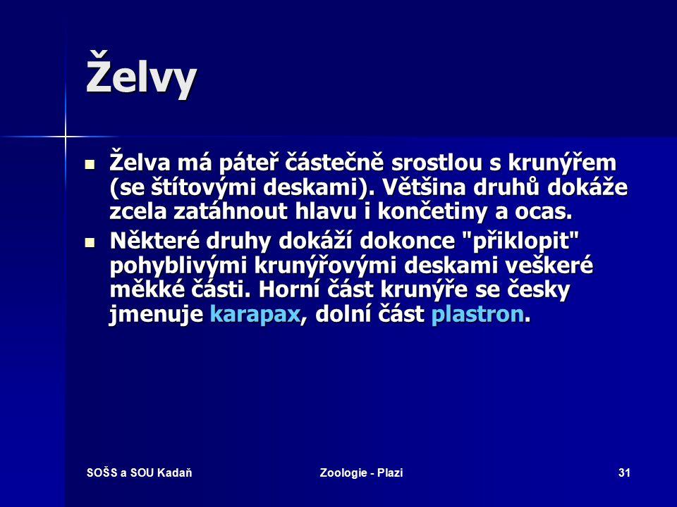 SOŠS a SOU KadaňZoologie - Plazi30 Ještěři – varanovití Varanovec bornejský