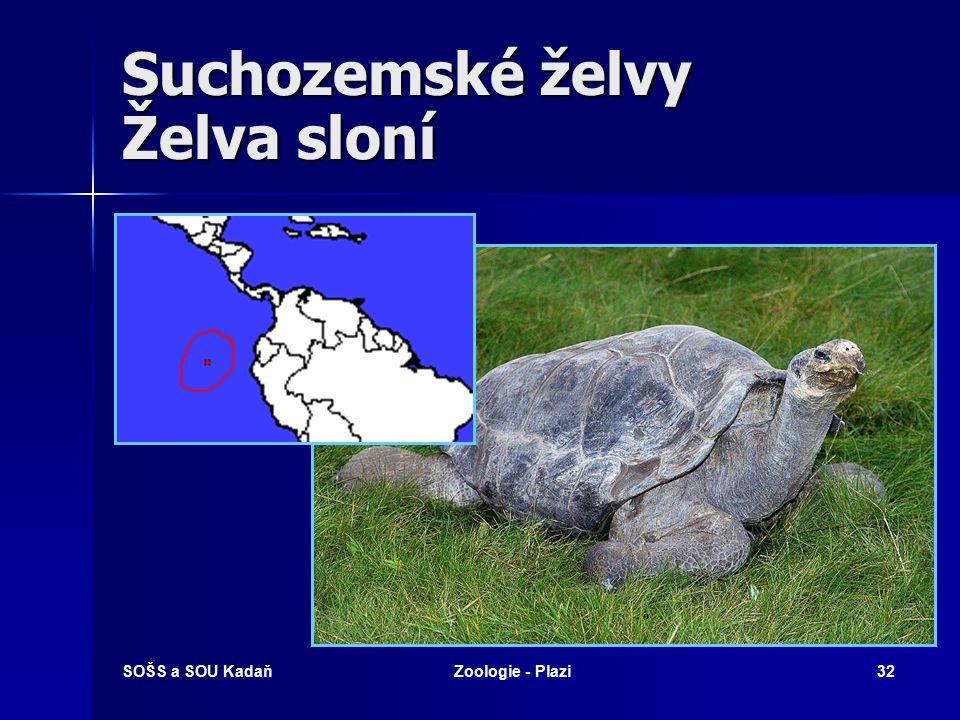 SOŠS a SOU KadaňZoologie - Plazi31 Želvy Želva má páteř částečně srostlou s krunýřem (se štítovými deskami). Většina druhů dokáže zcela zatáhnout hlav