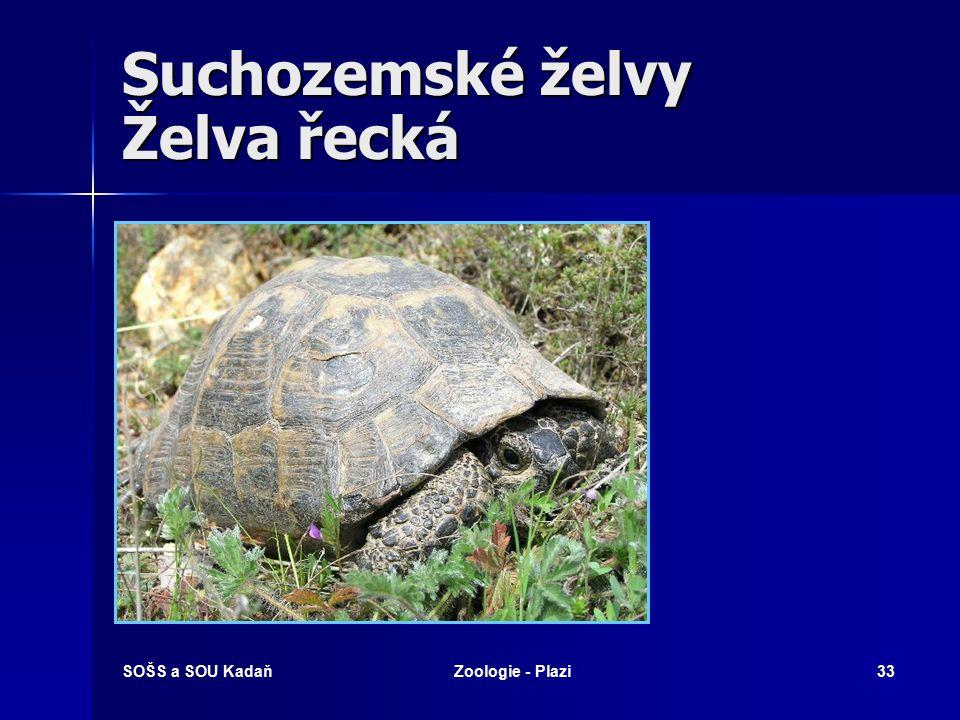 SOŠS a SOU KadaňZoologie - Plazi32 Suchozemské želvy Želva sloní