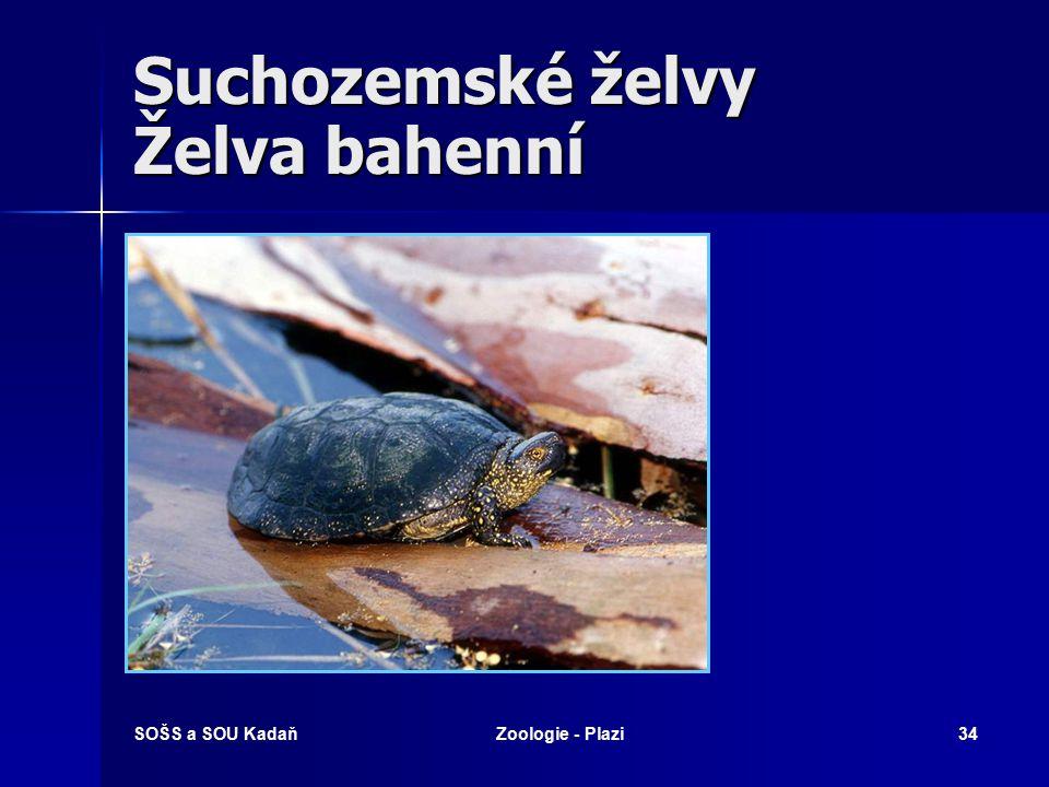 SOŠS a SOU KadaňZoologie - Plazi33 Suchozemské želvy Želva řecká