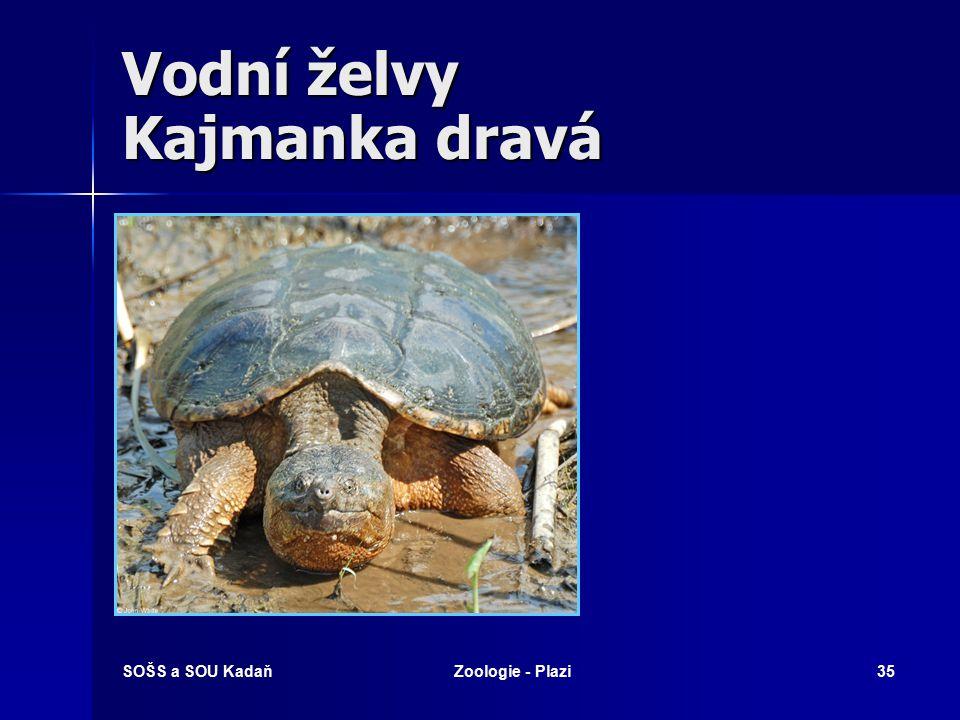 SOŠS a SOU KadaňZoologie - Plazi34 Suchozemské želvy Želva bahenní